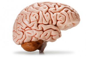 New study shows brain loss tied to hearing loss